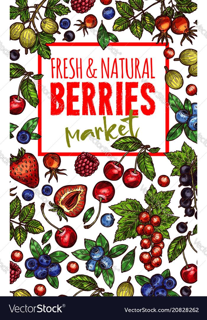 Natural fresh berries sketch poster