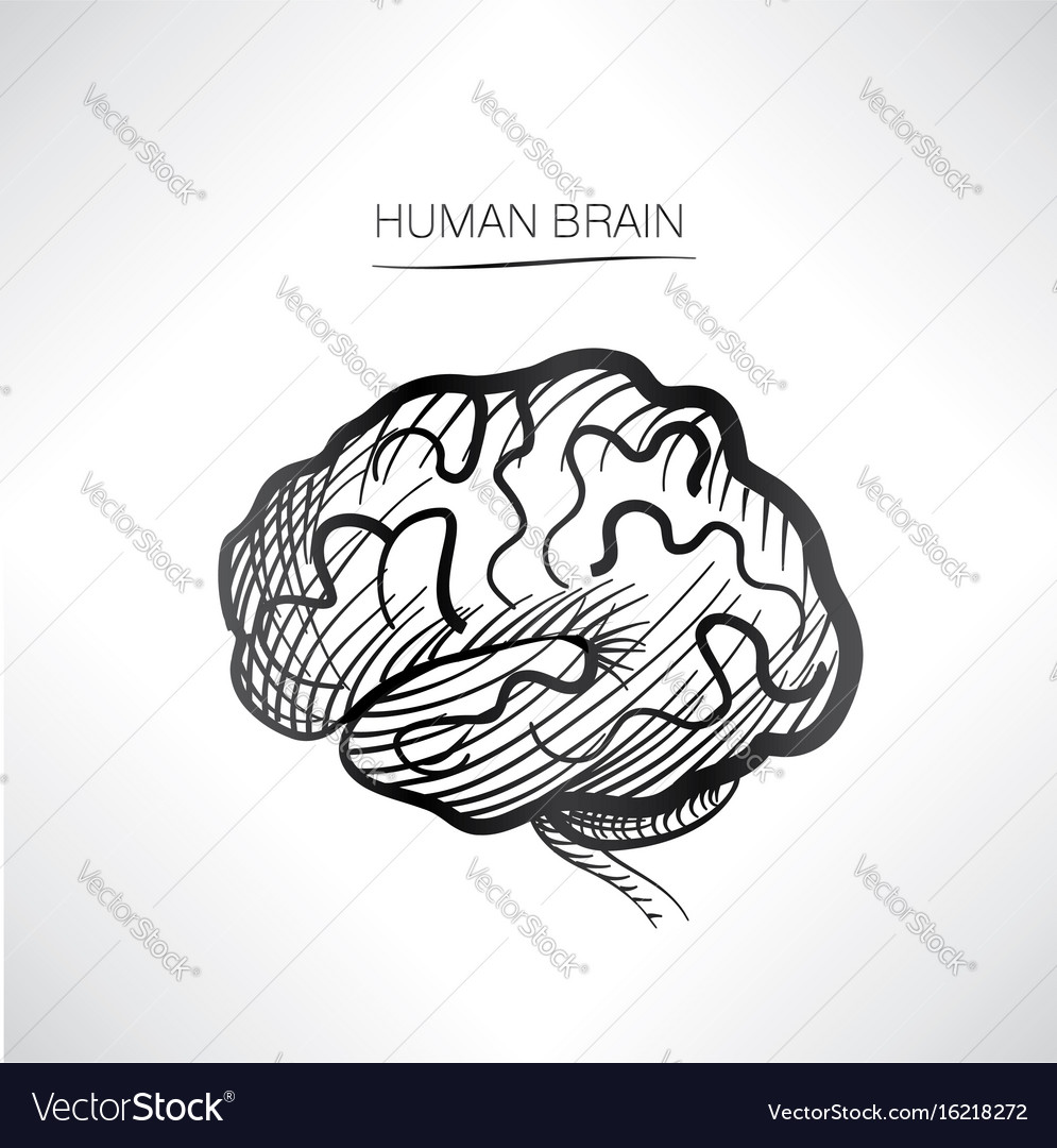 Occipital & Lobe Vector Images (62)