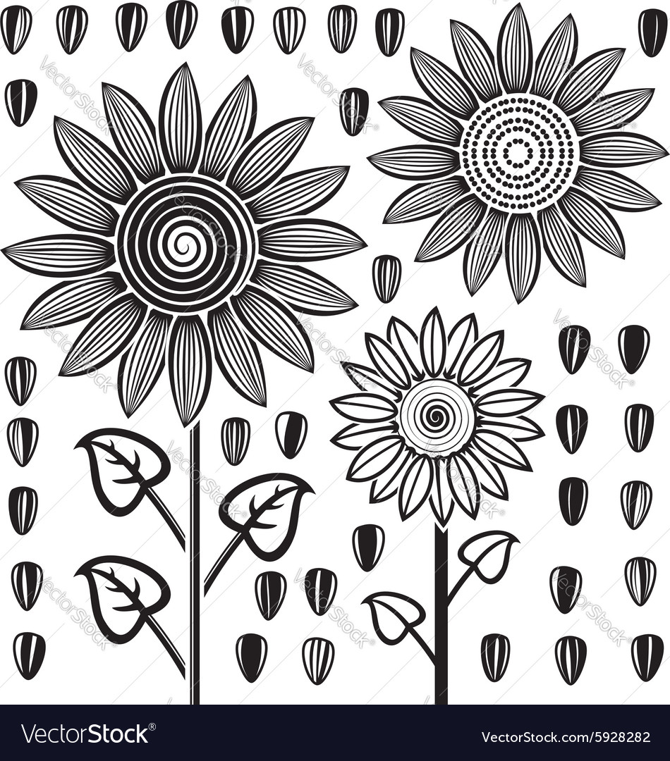 Sunflowers and seeds vector image
