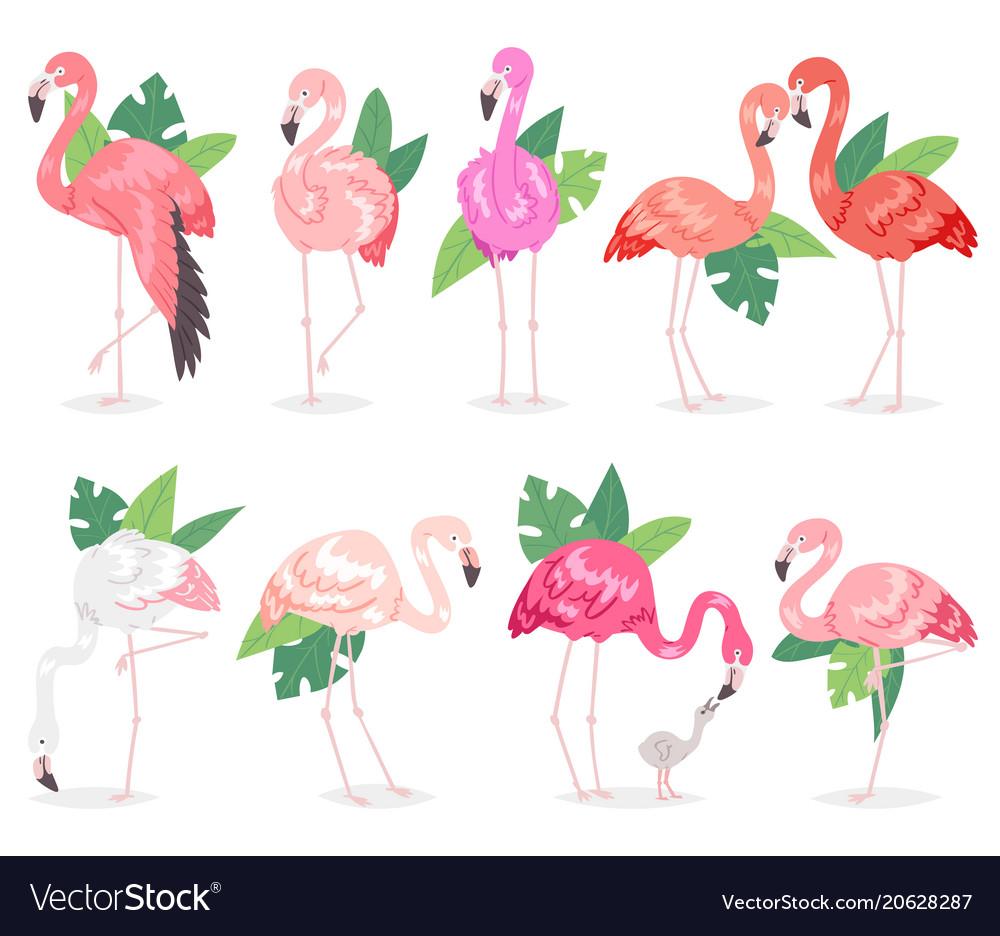 Flamingo tropical pink flamingos and exotic