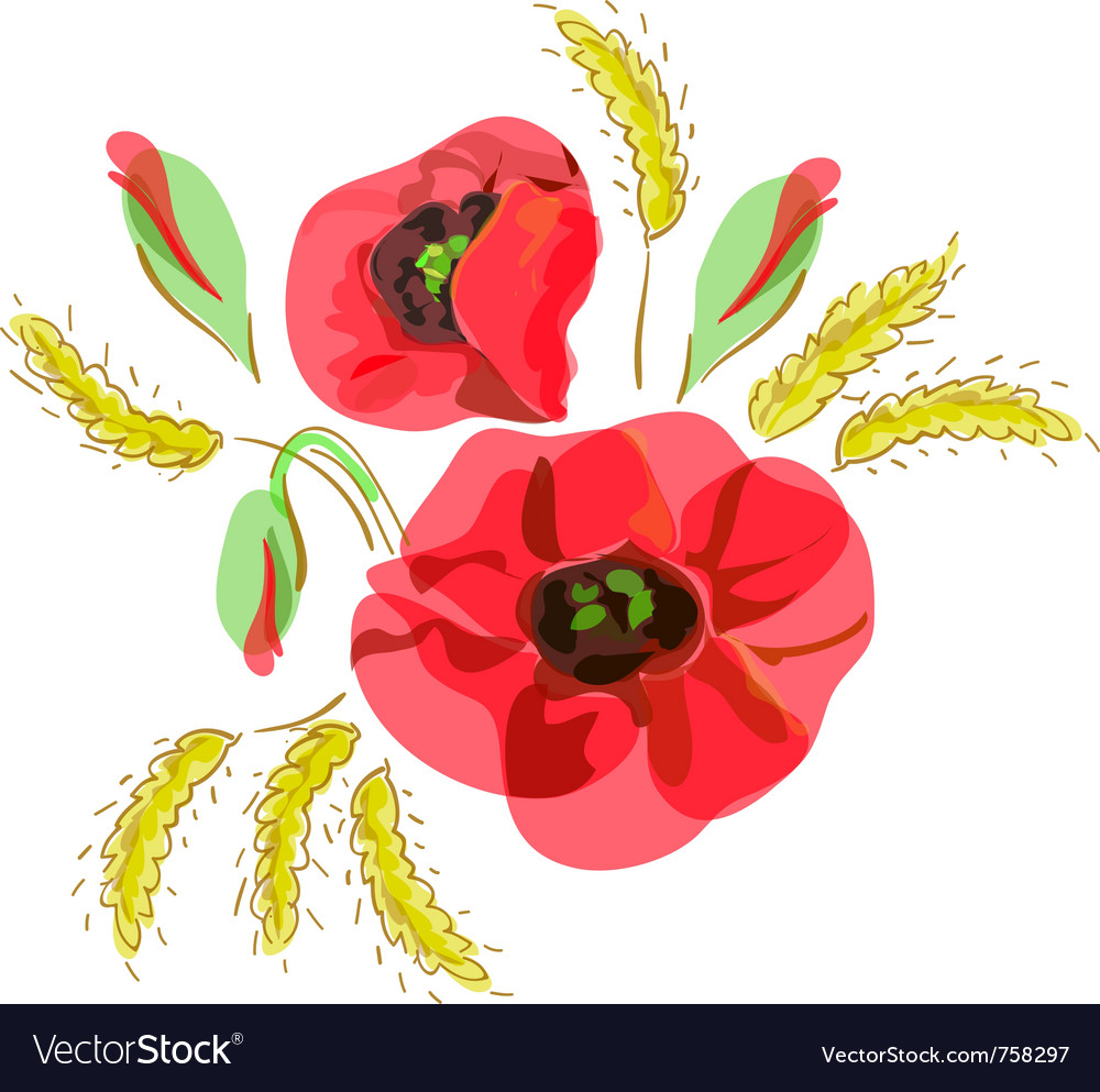 Red poppies and ears of wheat vector image