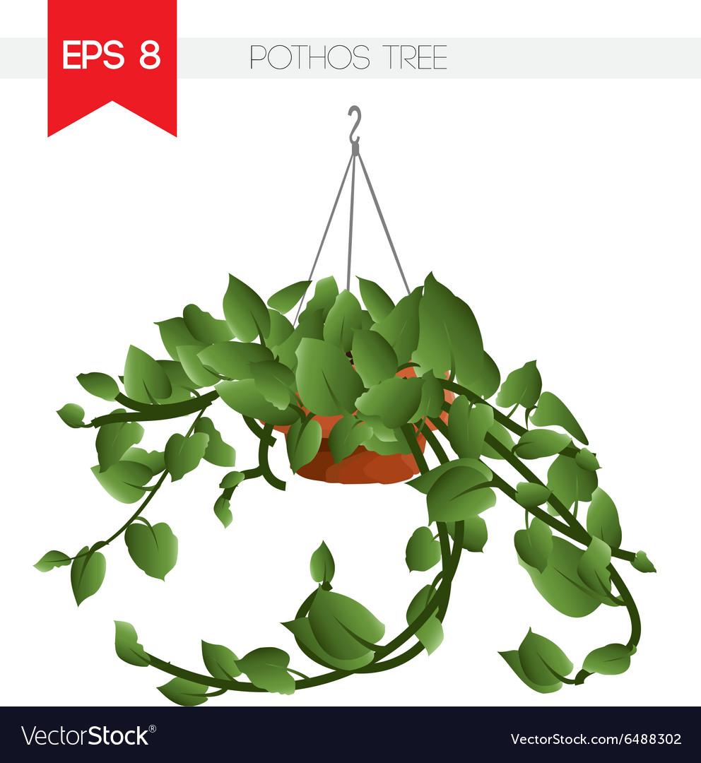 Pothos tree