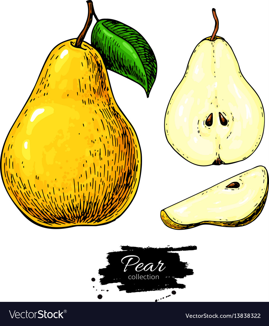Pear drawing isolated hand drawn full pear