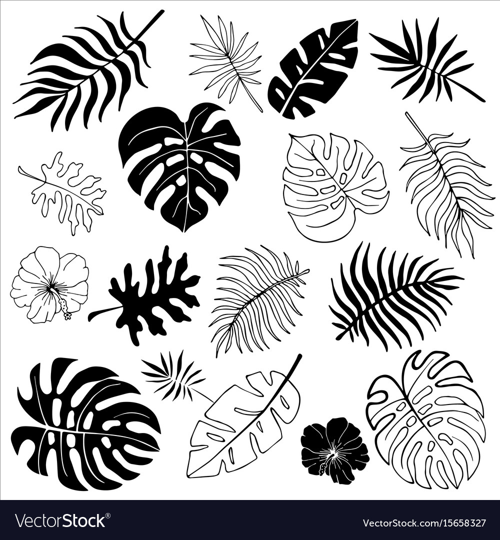 Isolated silhouettes of tropical palm leaves