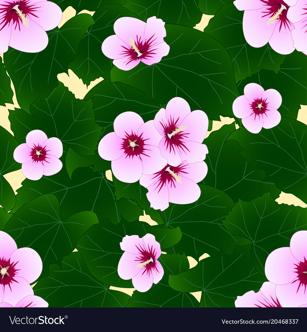 Hibiscus Syriacus Rose Of Sharon On Ivory Beige Vector Image