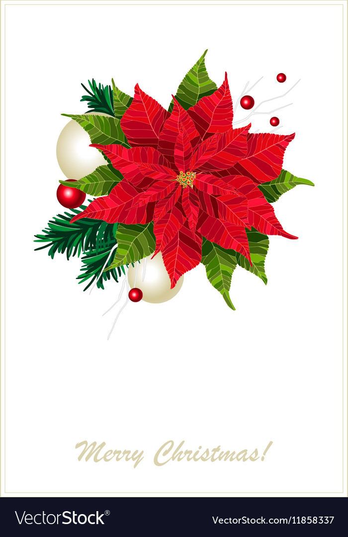 Red poinsettia flower realistic