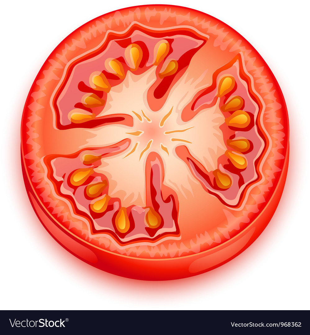 a slice of tomato royalty free vector image vectorstock