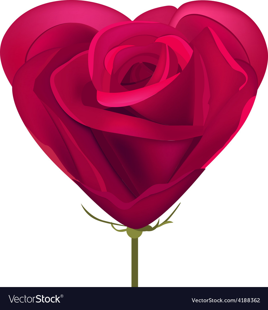 Heart made of red rose vector image