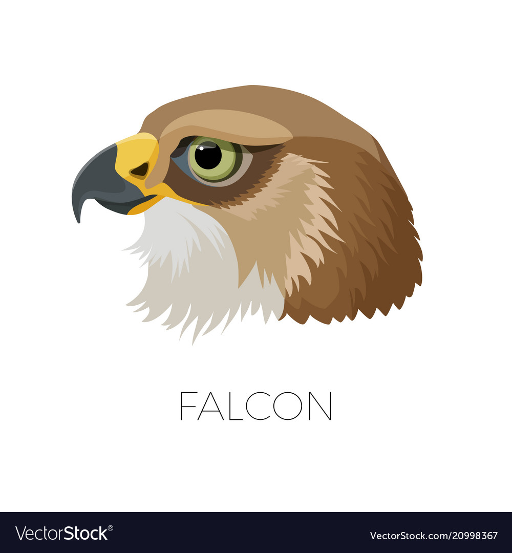 Falcon gorgeous profile with sharp beak and green