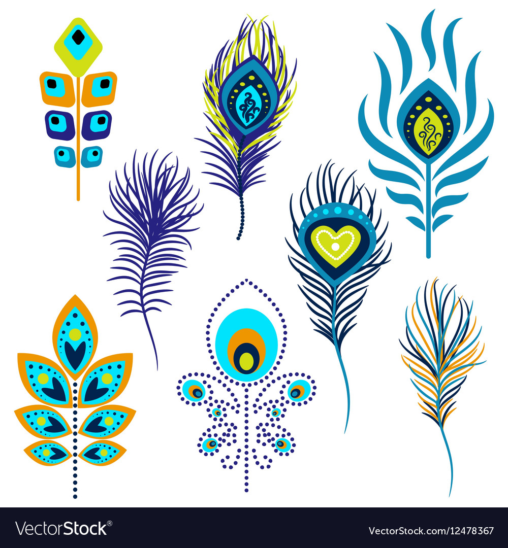 Peacock feathers clipart vector image