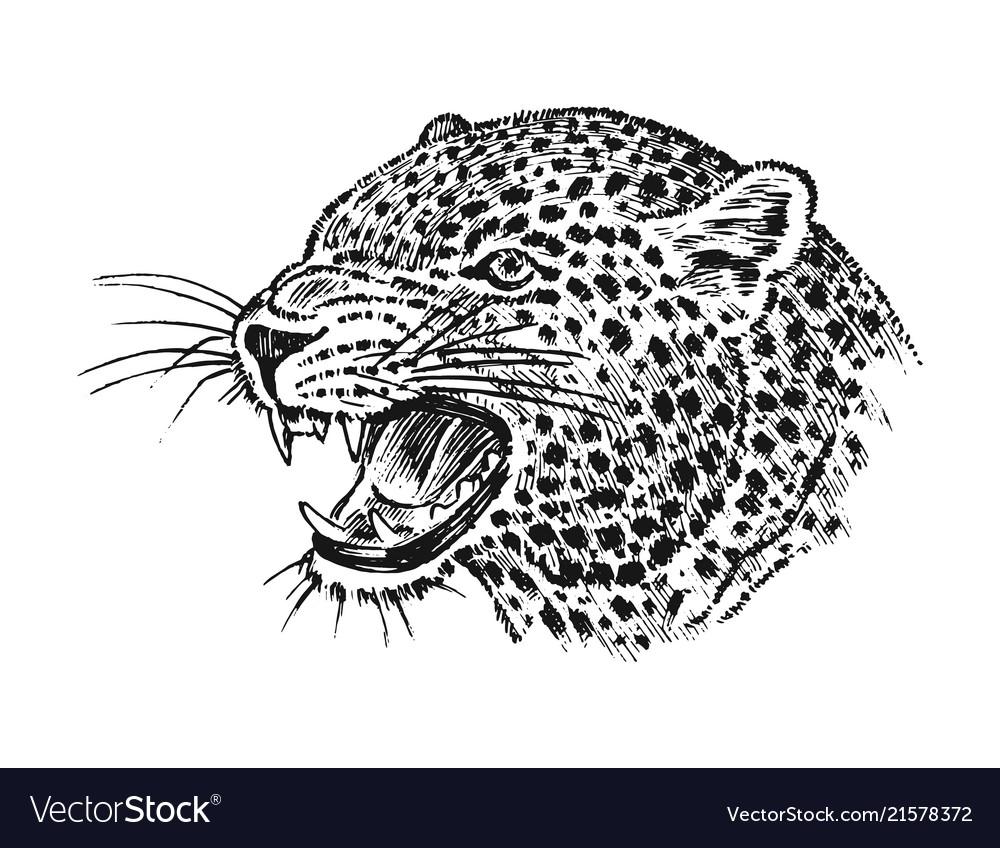 Japanese wild leopard portrait asian cat profile