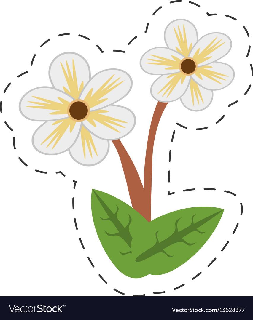 Cartoon Jasmine Flower Image Royalty Free Vector Image