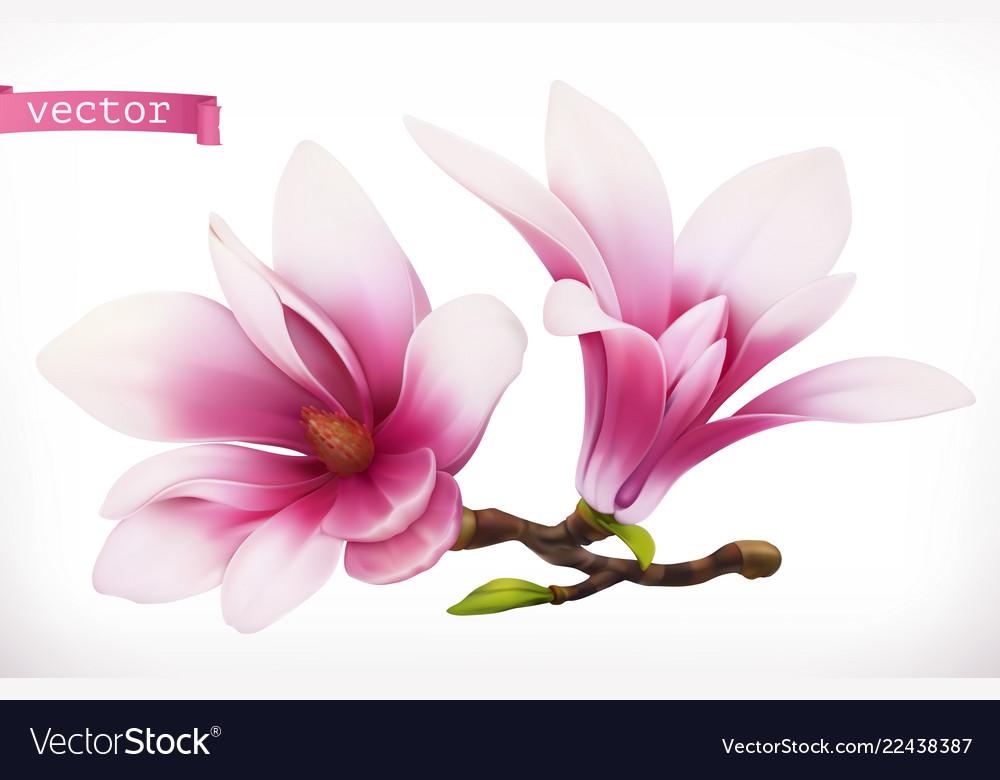 Magnolia 3d realistic icon