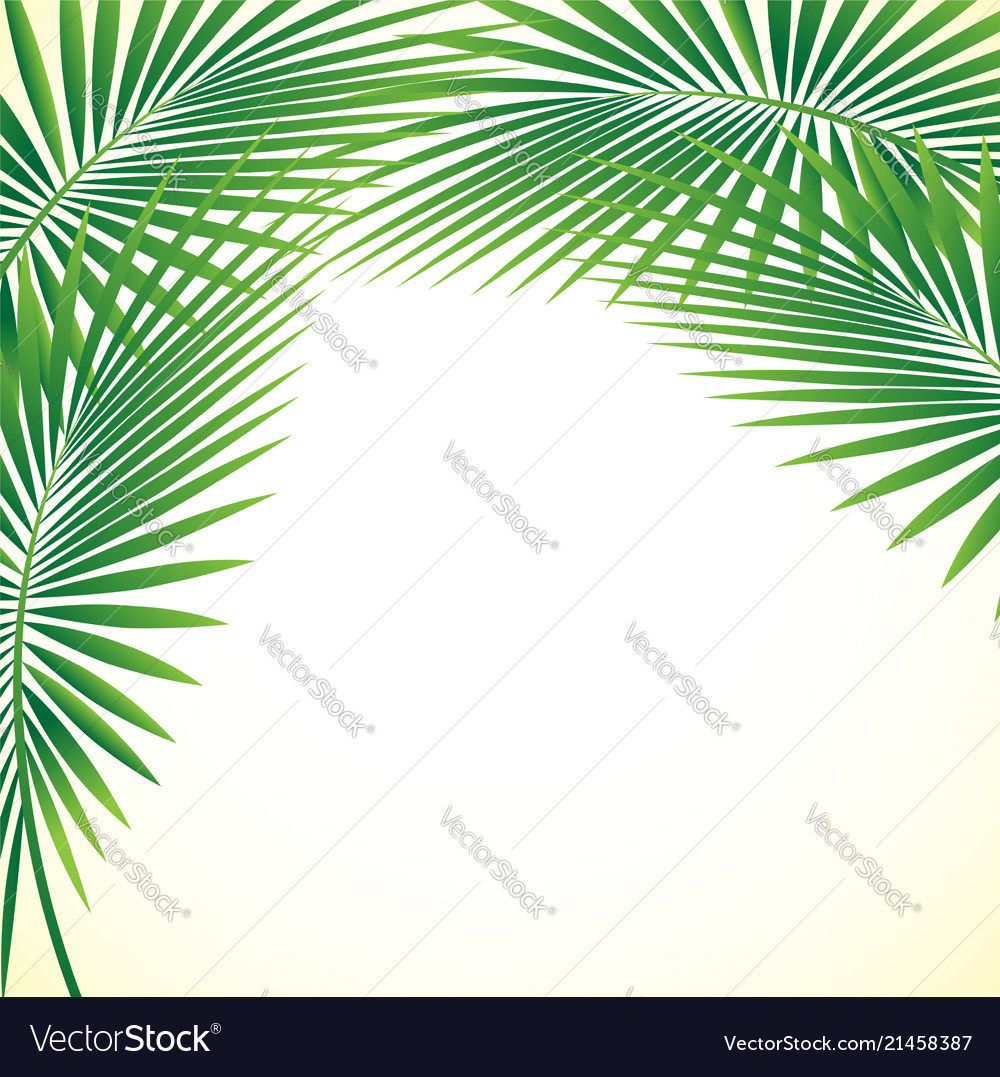 Palm leaf background eps10