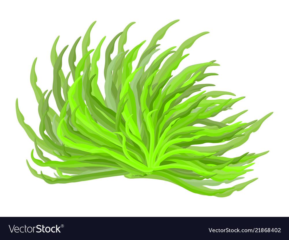 Algae symbol icon design beautiful