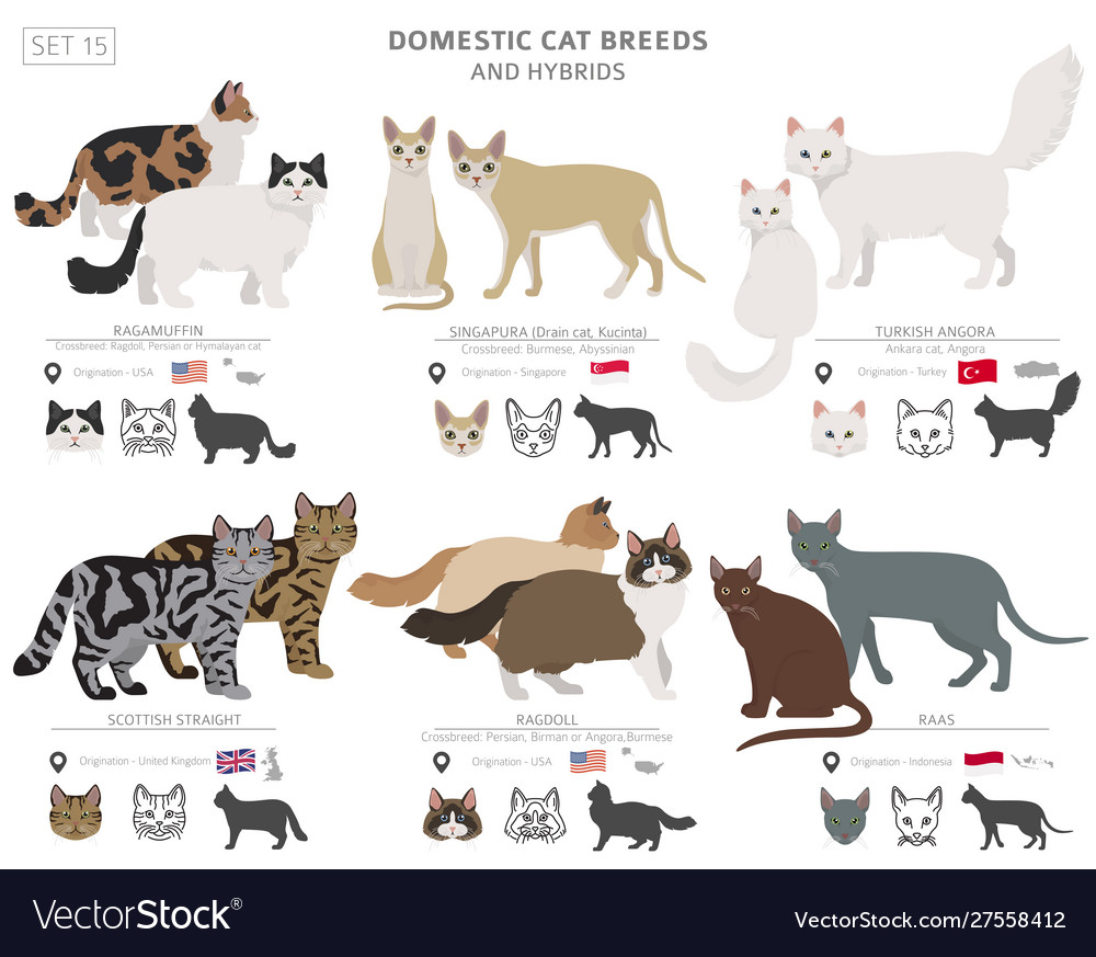 Domestic Cat Breeds And Hybrids Collection Vector Image