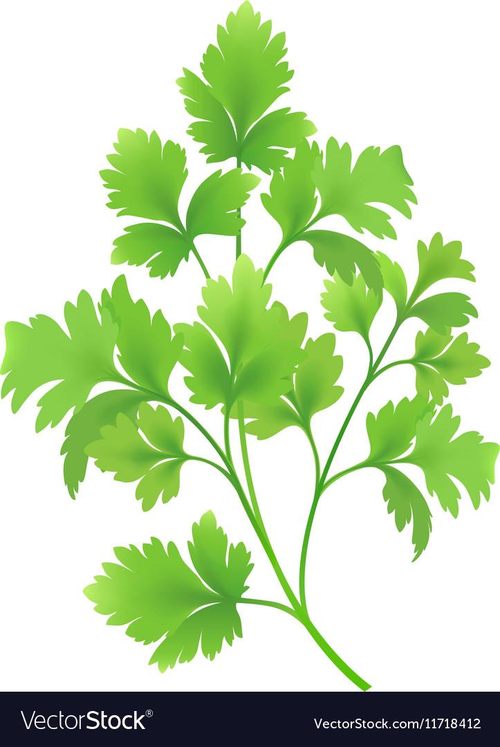 Twig of parsley