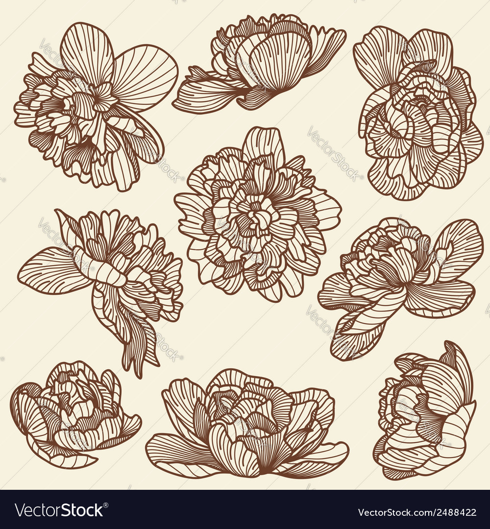 Peony drawings set vector image