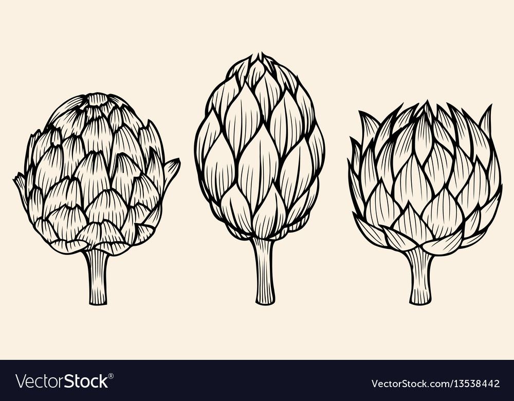 Vegetables artichoke on beige background vector image