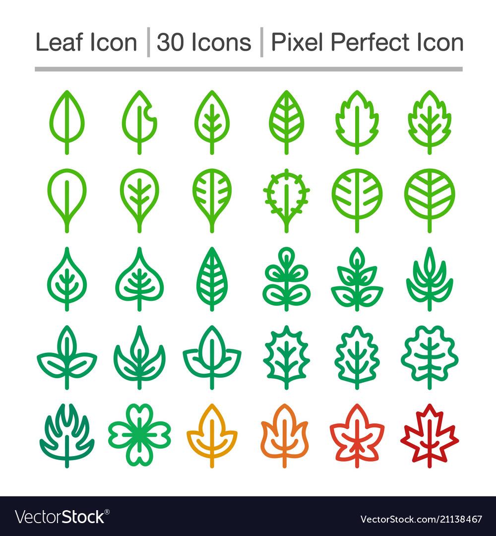 Leaf line icon