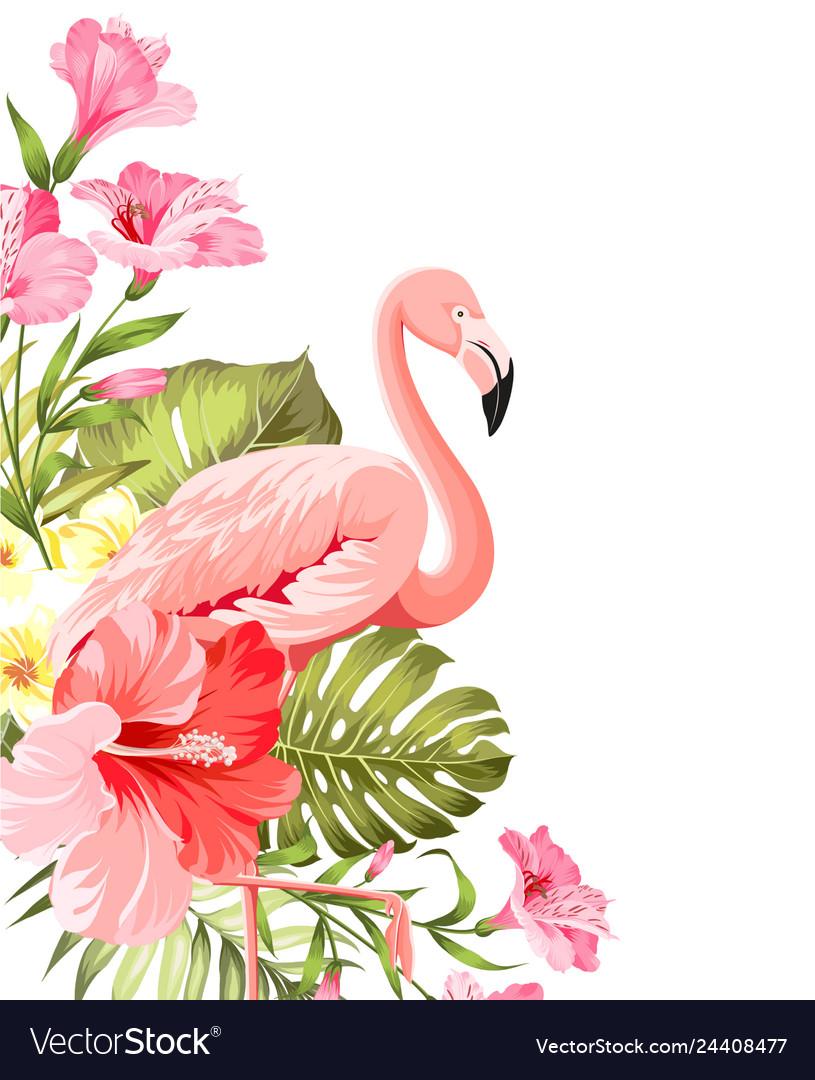 Flamingo background design tropical flowers