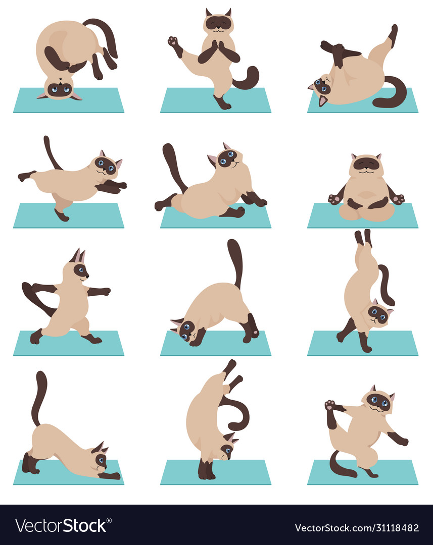 Cats Yoga Siamese Cats Different Yoga Poses And Vector Image