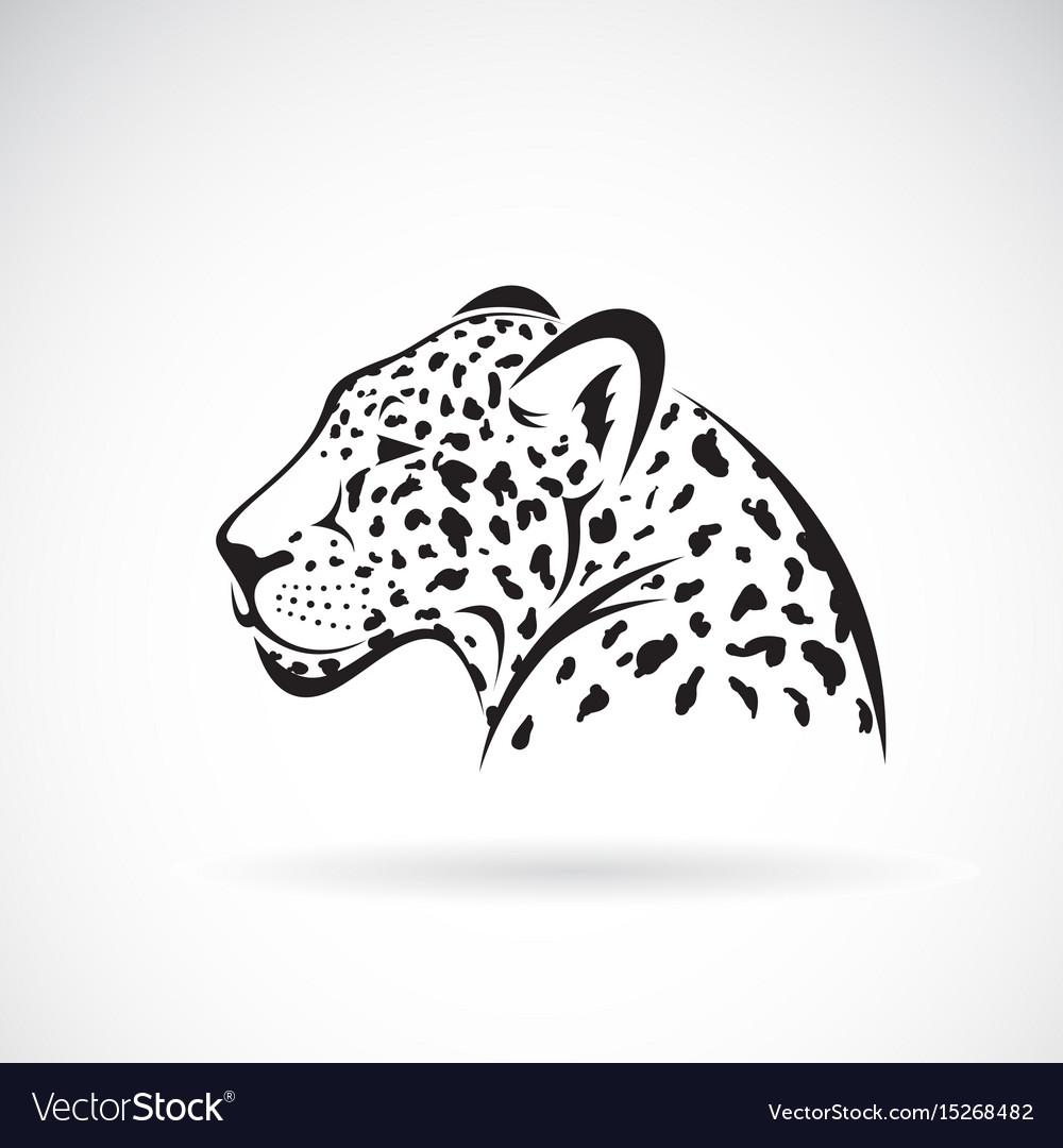Leopard on white background wild animals