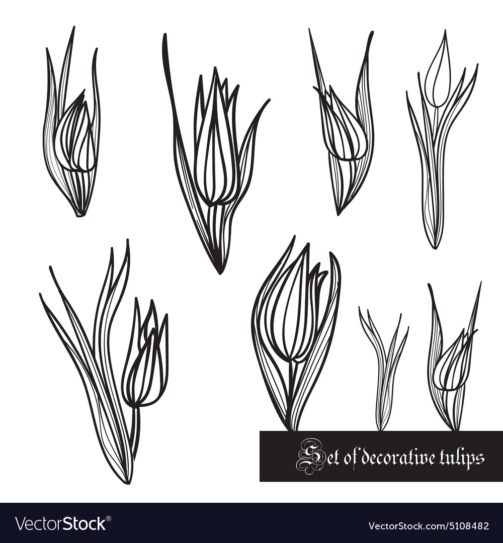 Set of decorative elements tulips and leaves vector image