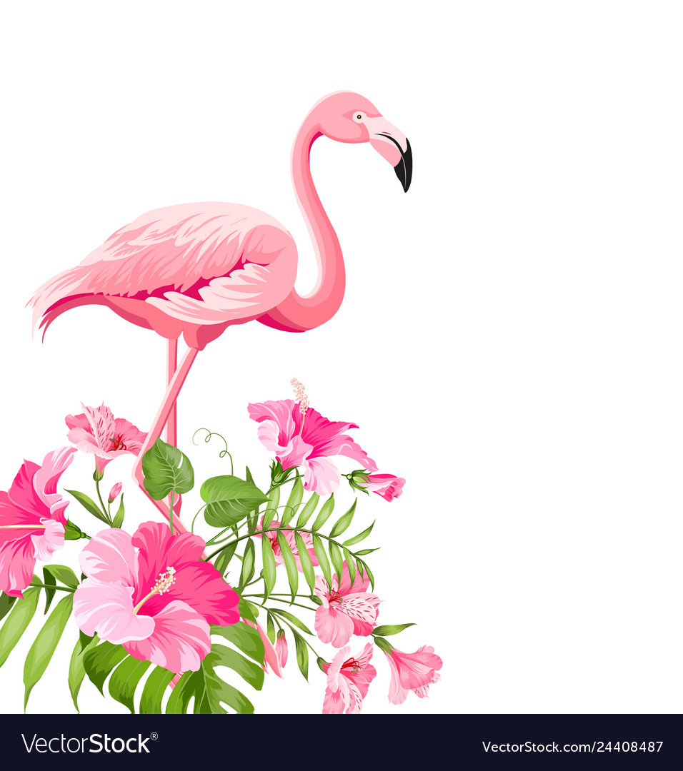 Beautiful tropical image with pink flamingo and