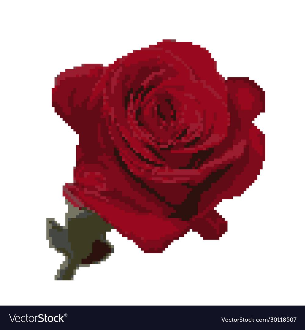 Rose Flower Isolated On White Pixel Art Royalty Free Vector