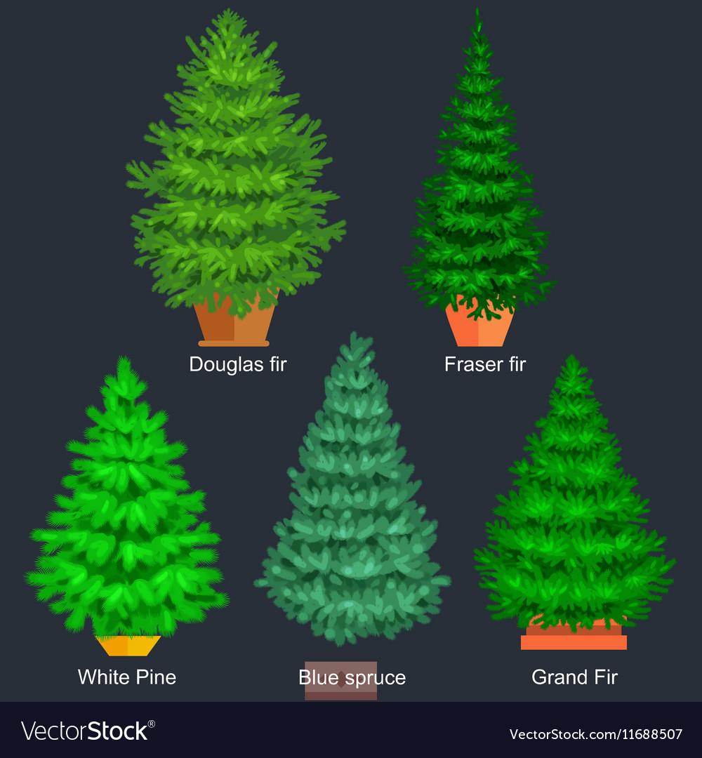 set of potted christmas tree like fir or vector image - Potted Christmas Tree
