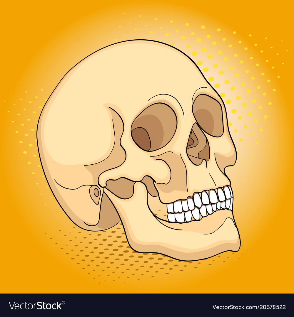 Pop art medical objects human skull comic book