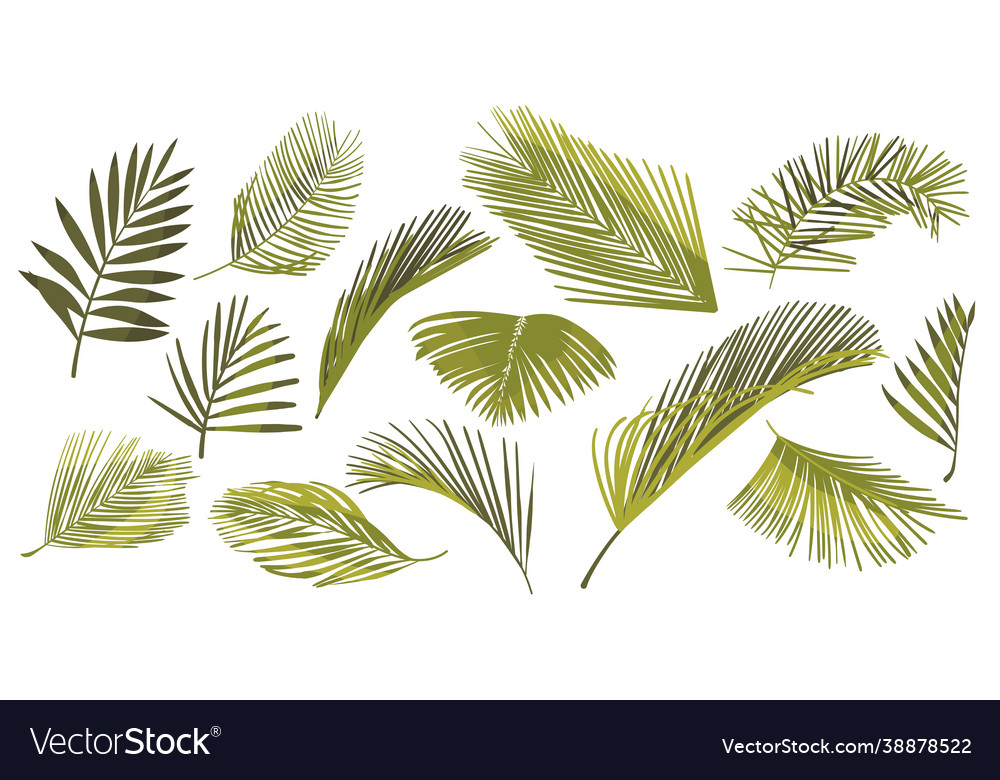 Set coconut palm leaves isolated on white