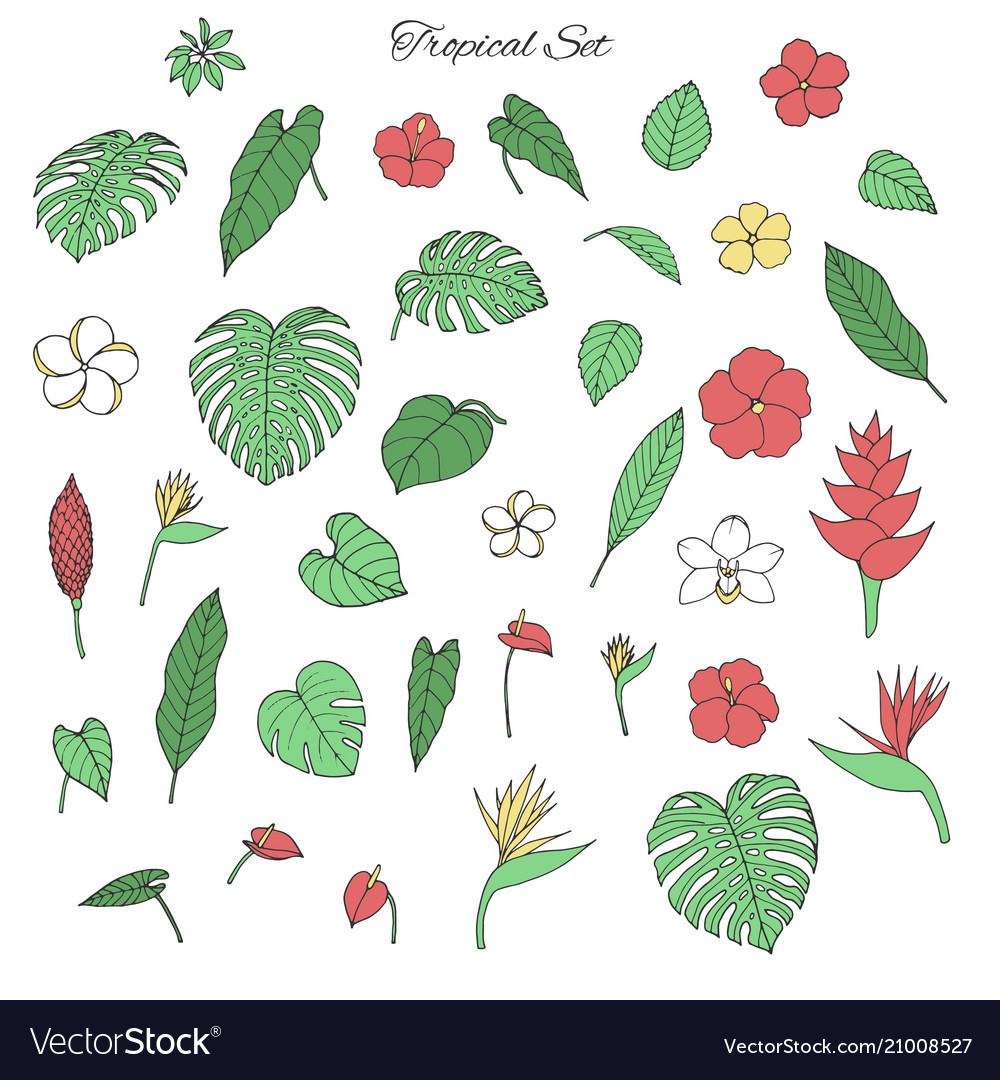 Tropical set with monstera leaves exotic flowers