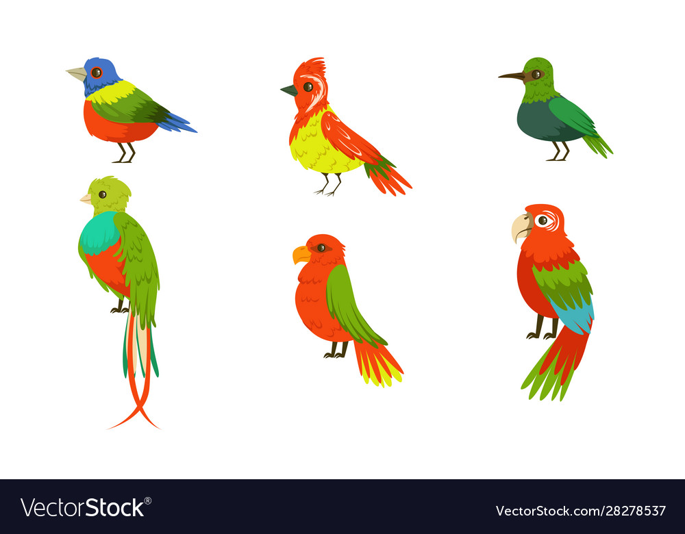 Tropical birds collection beautiful birdies