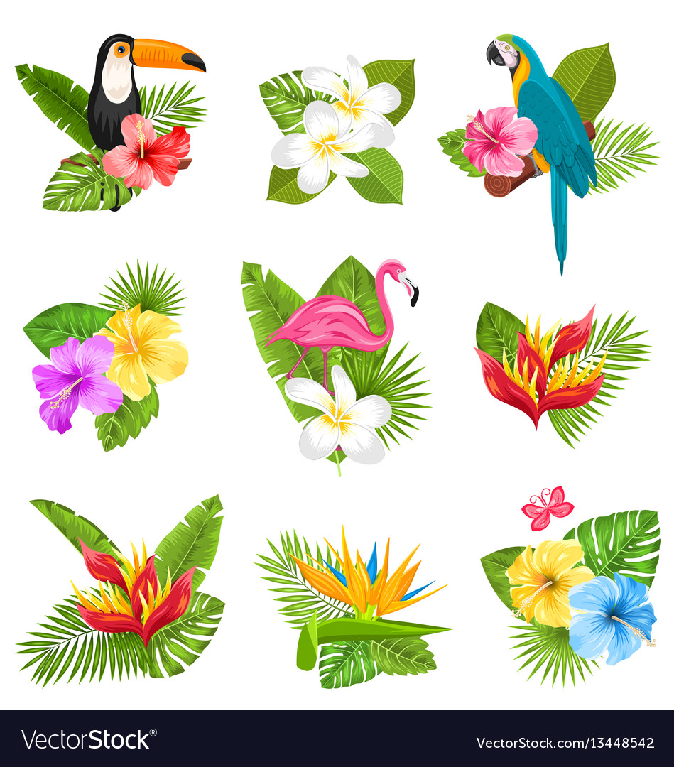 Set composition with tropical flowers exotic bird