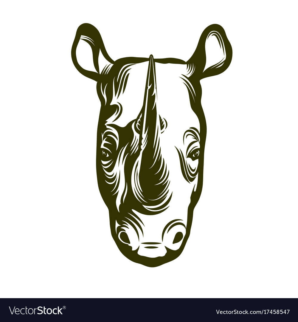 Head of african rhino