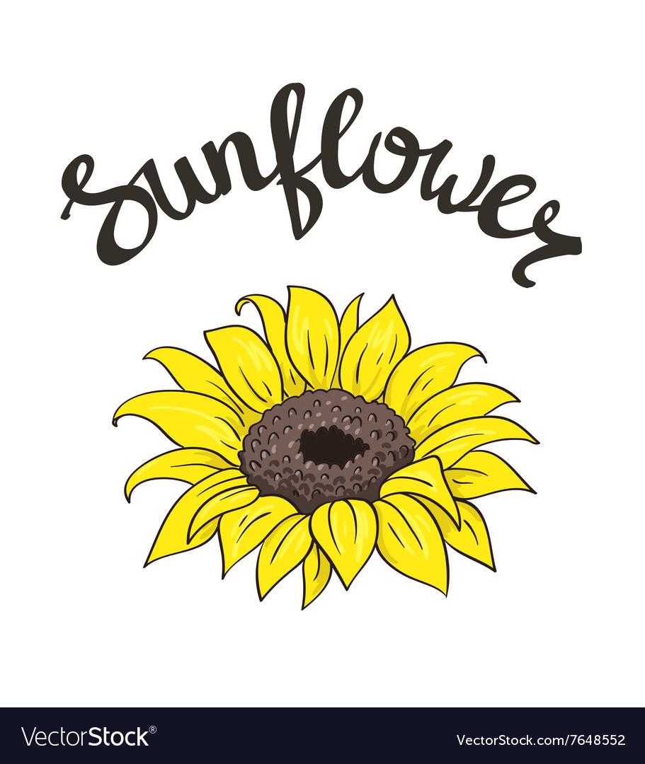 Hand drawn yellow sunflower on the white