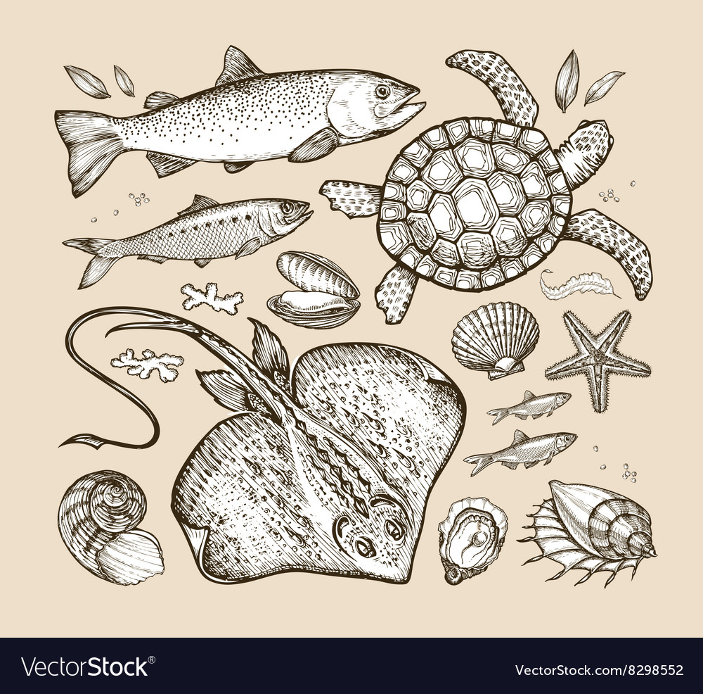 Sea animals hand-drawn sketches fish trout