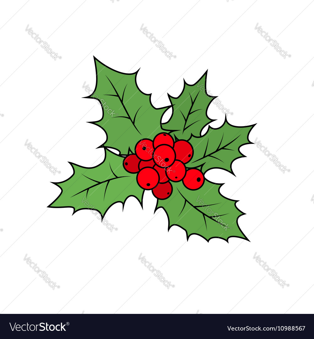 Christmas Holly Berry Isolated on White