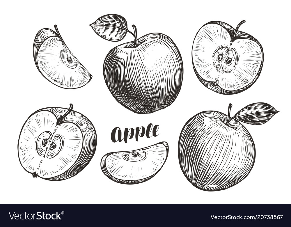 Hand-drawn apples and slices sketch fruit