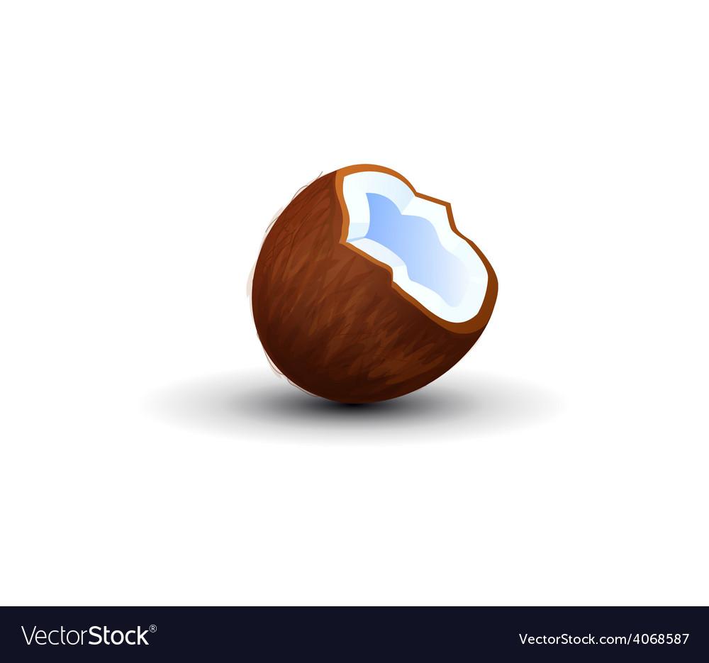 Tasty Tropical Coconut vector image
