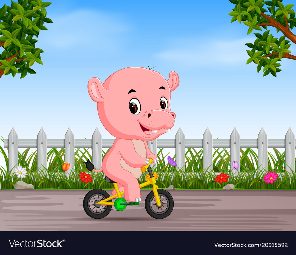 Funny hippo cycling in the road