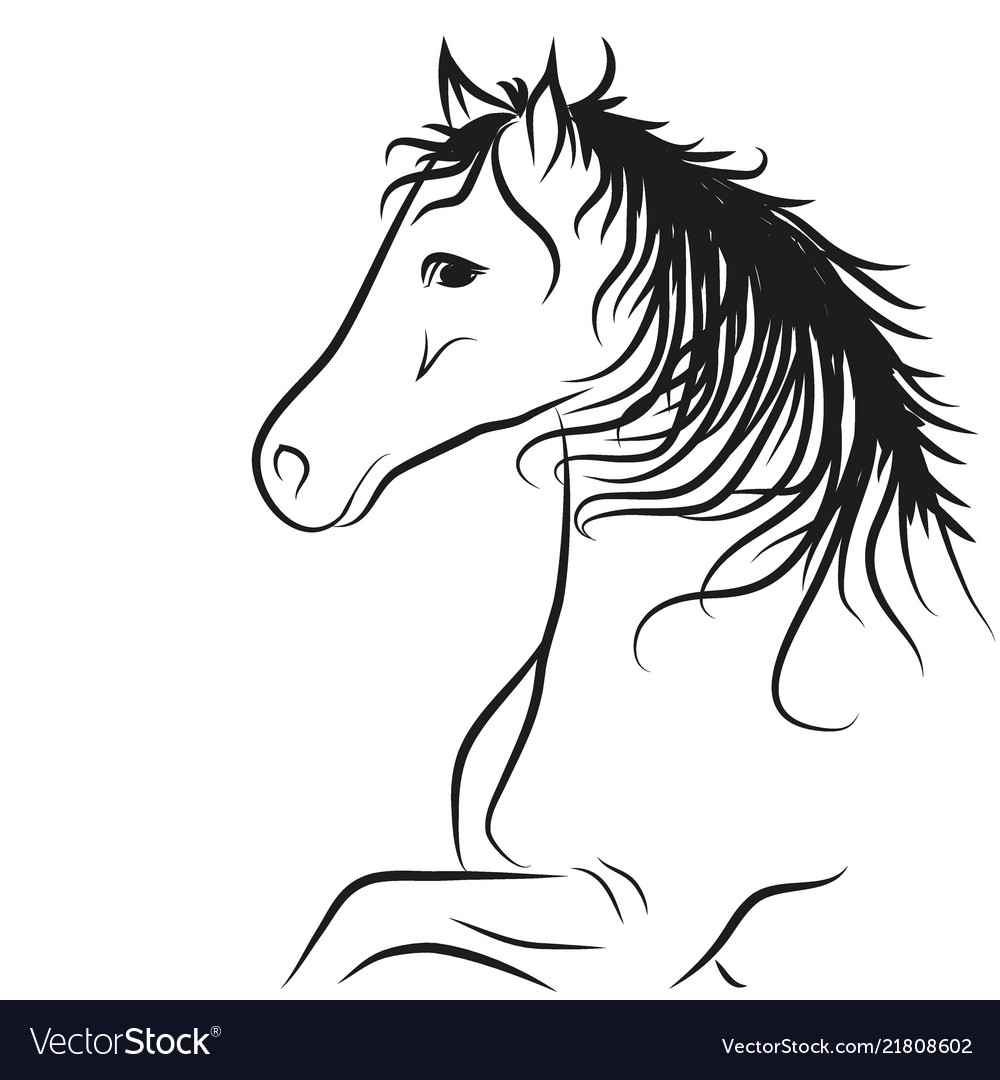 Horse drawn outline in black coloring