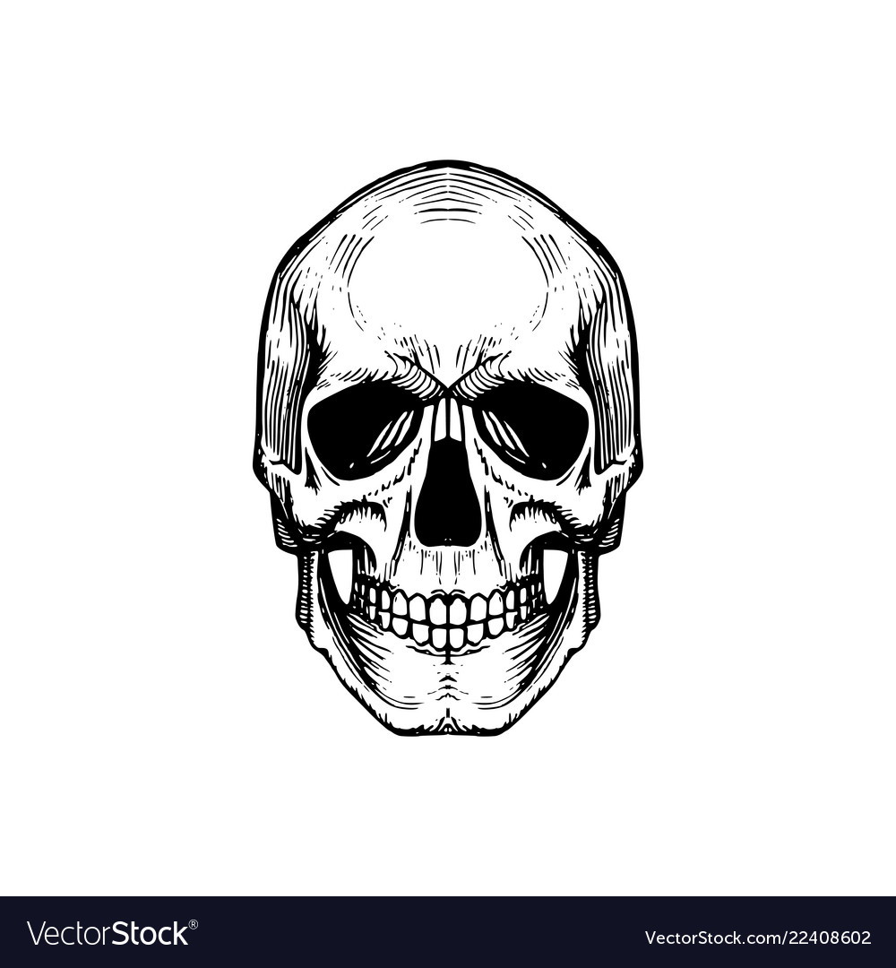 Skull in engraving style