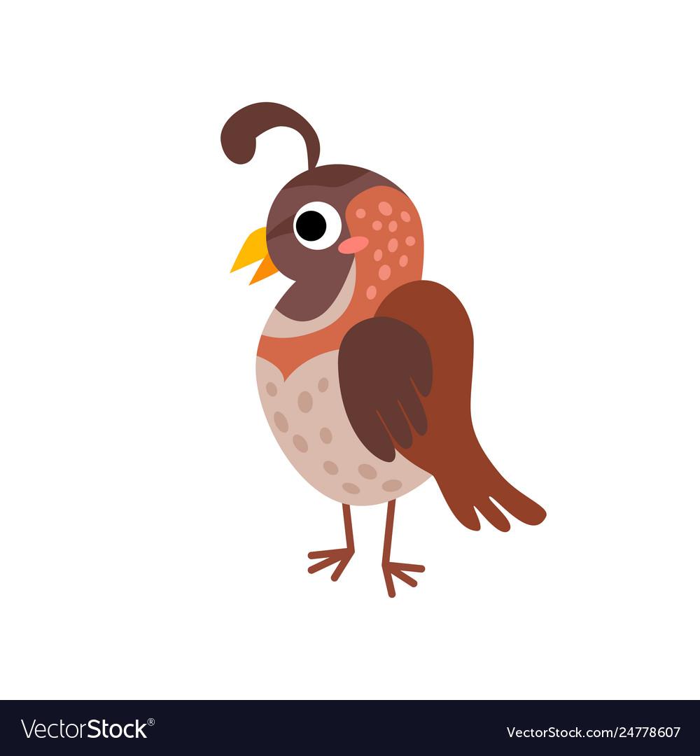Cute animals - quail