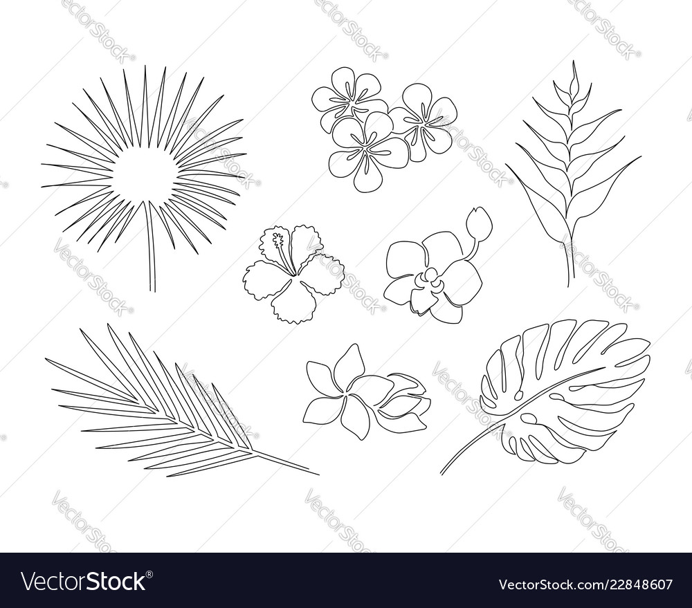 Set of one line drawing tropical plants