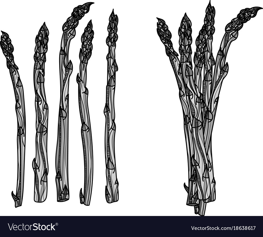 5 stalks and bundle of asparagus