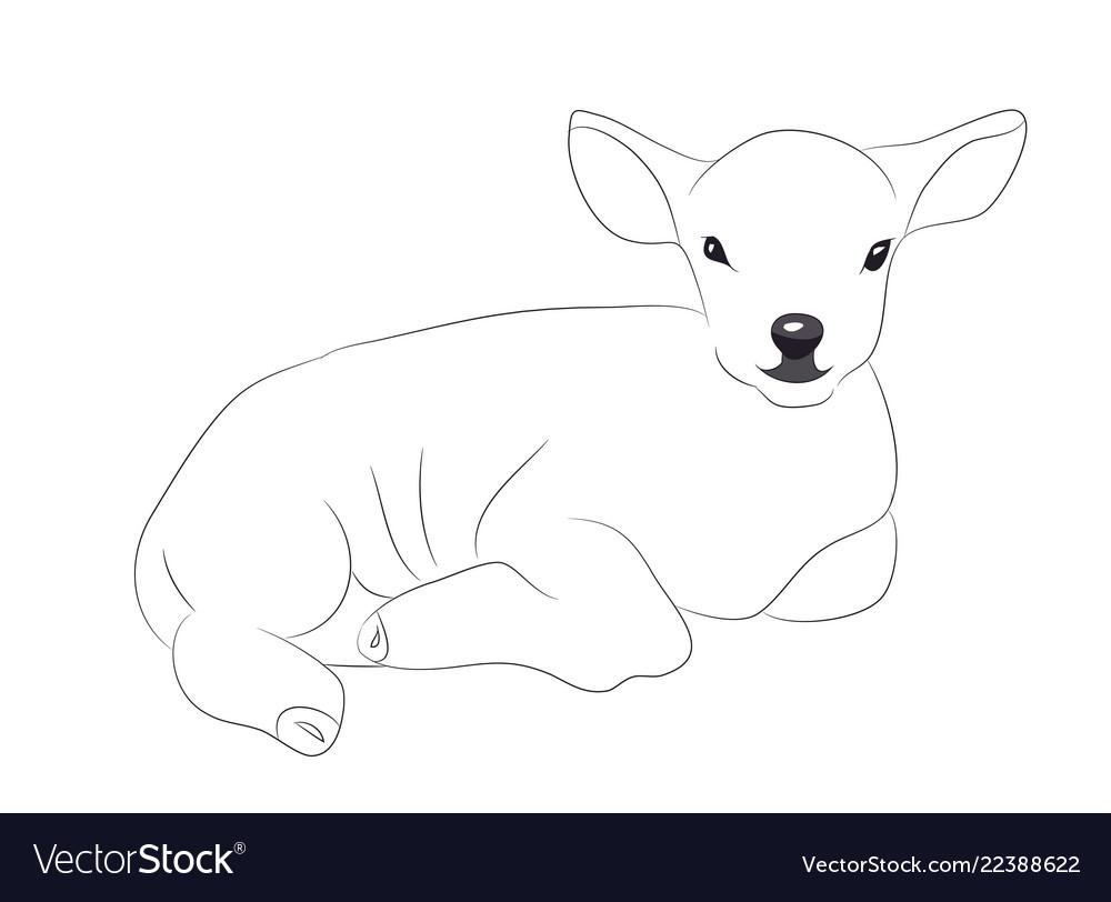 Lamb lies drawing lines