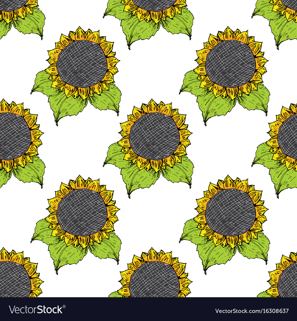 Sunflower seamless pattern hand drawn sketch